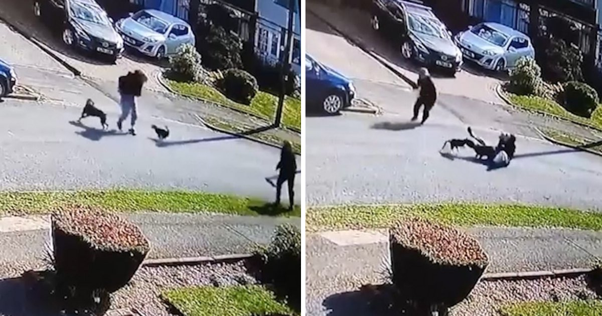 d4 1.png?resize=1200,630 - The Fearless Cat Attacked a Staffordshire Bull Terrier Leaving The Owner Flat On His Back