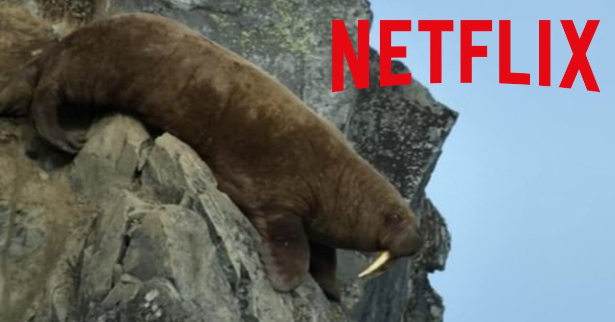 d4 6.png?resize=412,232 - Our Planet, The New Netflix Show Can Bring Animal Lovers to Tears