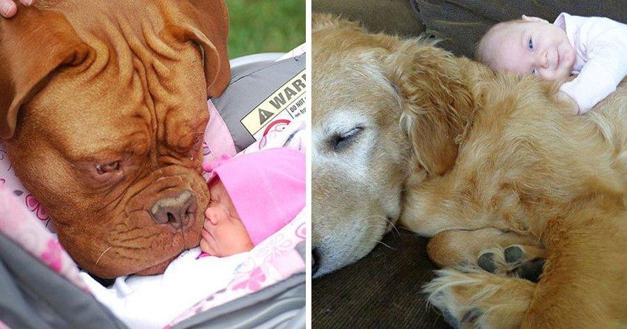 d6.jpg?resize=1200,630 - 29 Fotos provando que crianças e animais podem ser melhores amigos