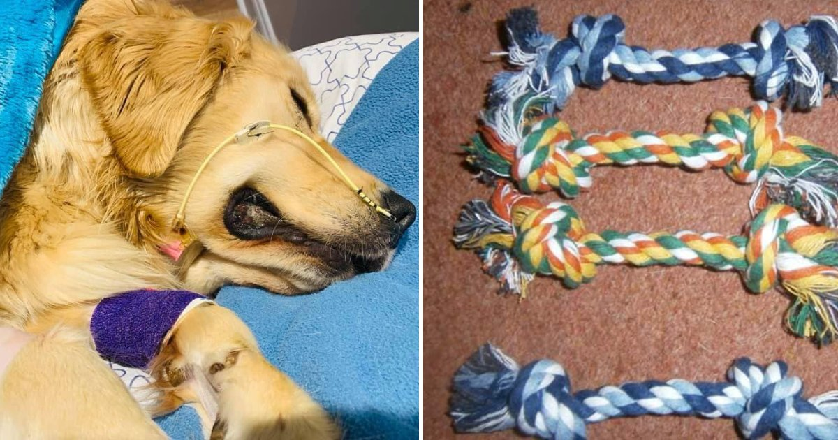 dog and rope toys.png?resize=412,232 - Devastated Dog Owner Warned People About The Dangers Of Rope Toys