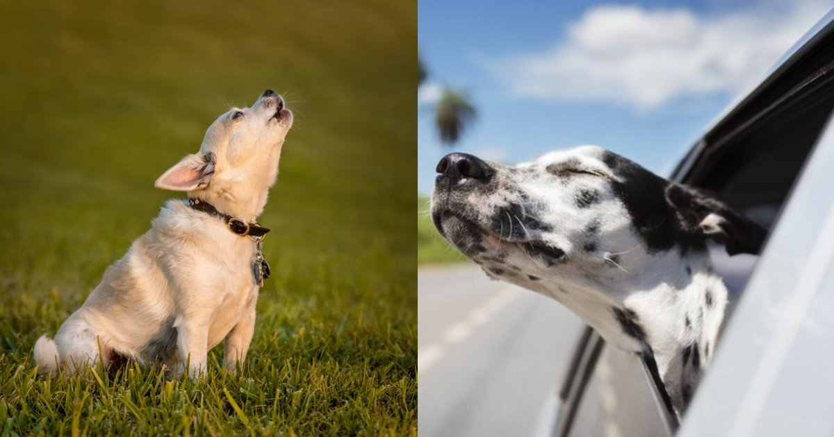 dog behaviors.png?resize=1200,630 - 20 Bizarre Dog Behaviors Explained By Experts To Solve Your Curiosities