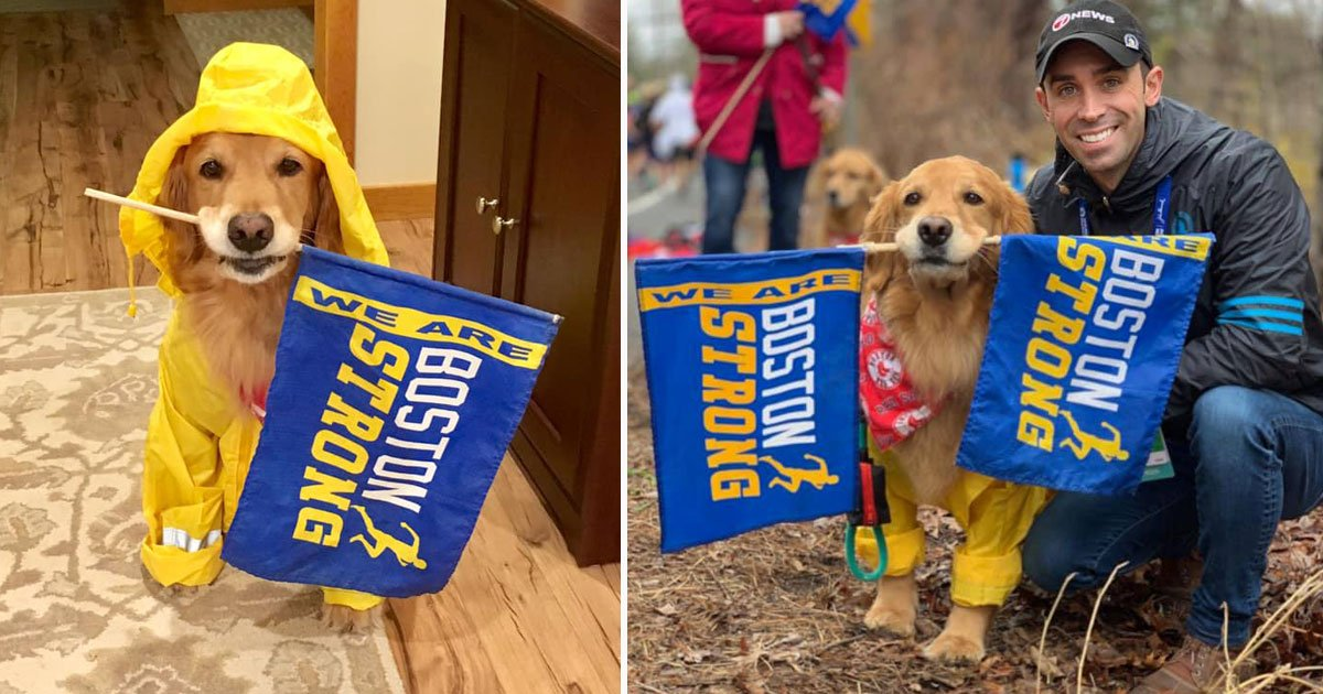 dog cheerleader.jpg?resize=1200,630 - Golden Retriever Participated As A Cheerleader To Motivate Boston Marathon Runners