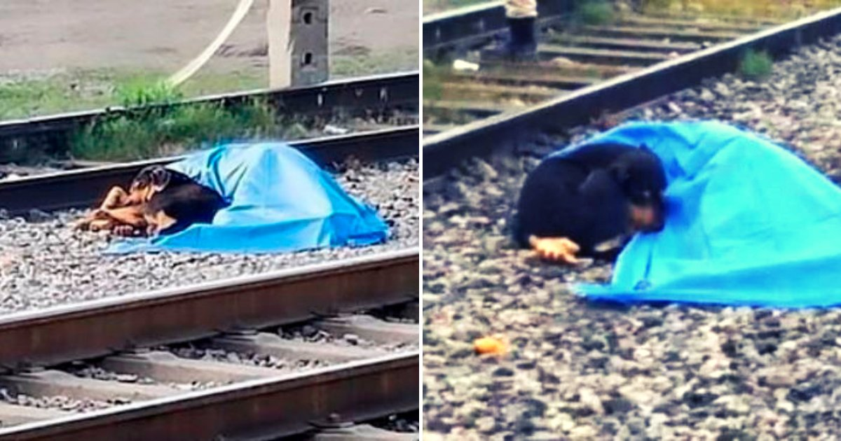 dog4.png?resize=1200,630 - Loyal And Heartbroken Dog Lies Next To Owner's Body After He Was Hit By Train