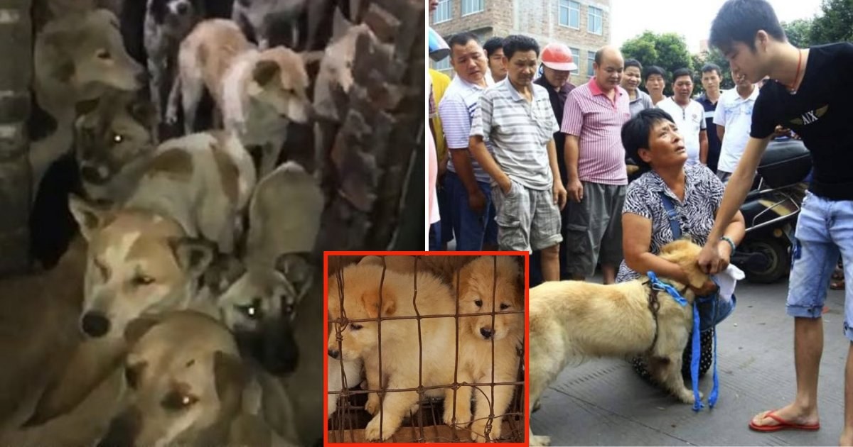 dog6 1.png?resize=1200,630 - Hundreds Of Dogs, Including Stolen Pets, Are Kept Into Filthy Warehouses As They Wait To Be Sent To Yulin Festival