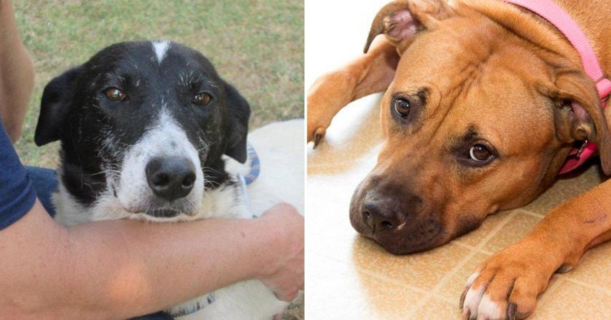 doggy2.png?resize=412,232 - Un avertissement est émis aux propriétaires d'animaux alors qu'un chien est mort d'une maladie parasitaire pouvant être transmise aux humains