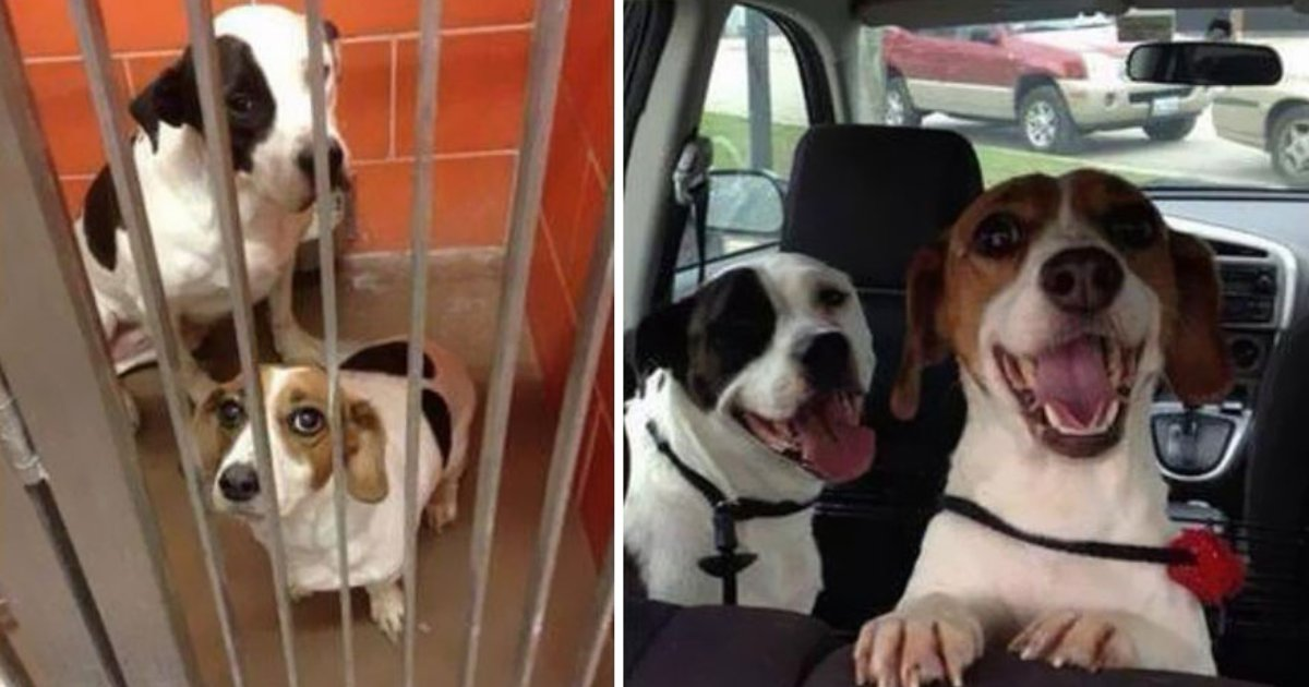 dogs adopted.png?resize=412,232 - 25 Heartwarming Before and After Photos of Adopted Dogs