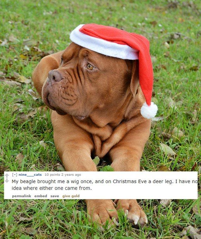 Dog wearing a Santa hat.