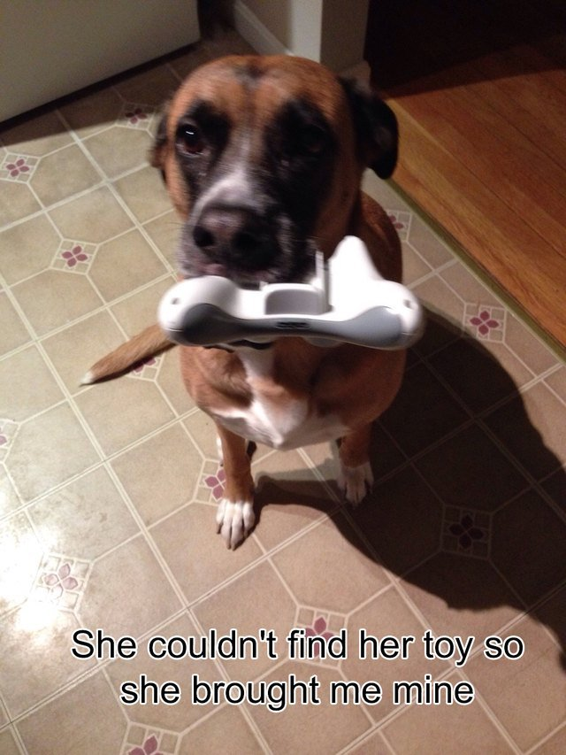 Dog holding a PlayStation controller.