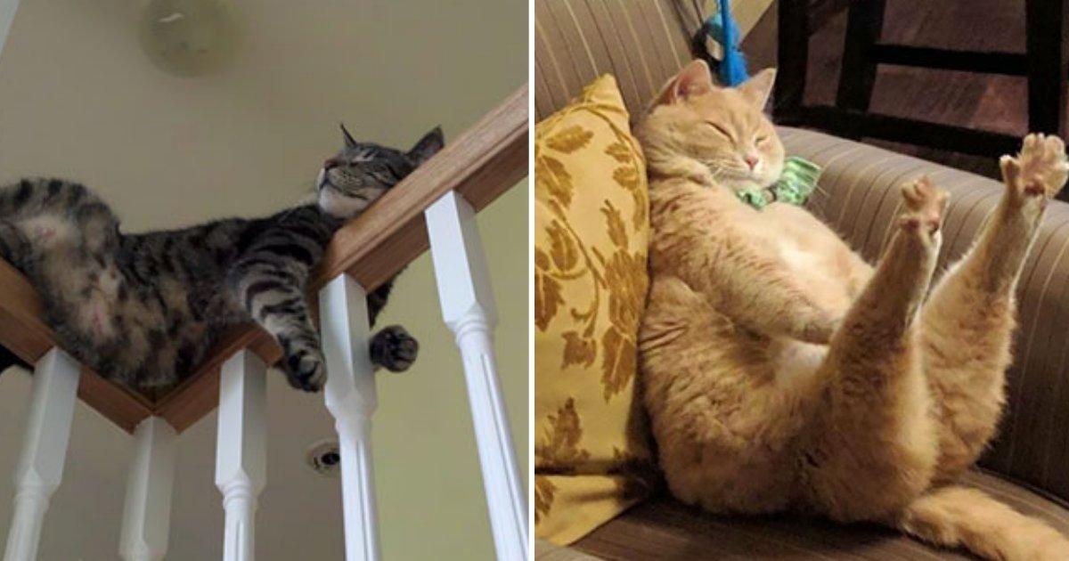e18482e185a3e186bce1848be185b5 fin 1.png?resize=1200,630 - '귀여운' 고양이들의 '기괴한' 자는 모습들 Top 10