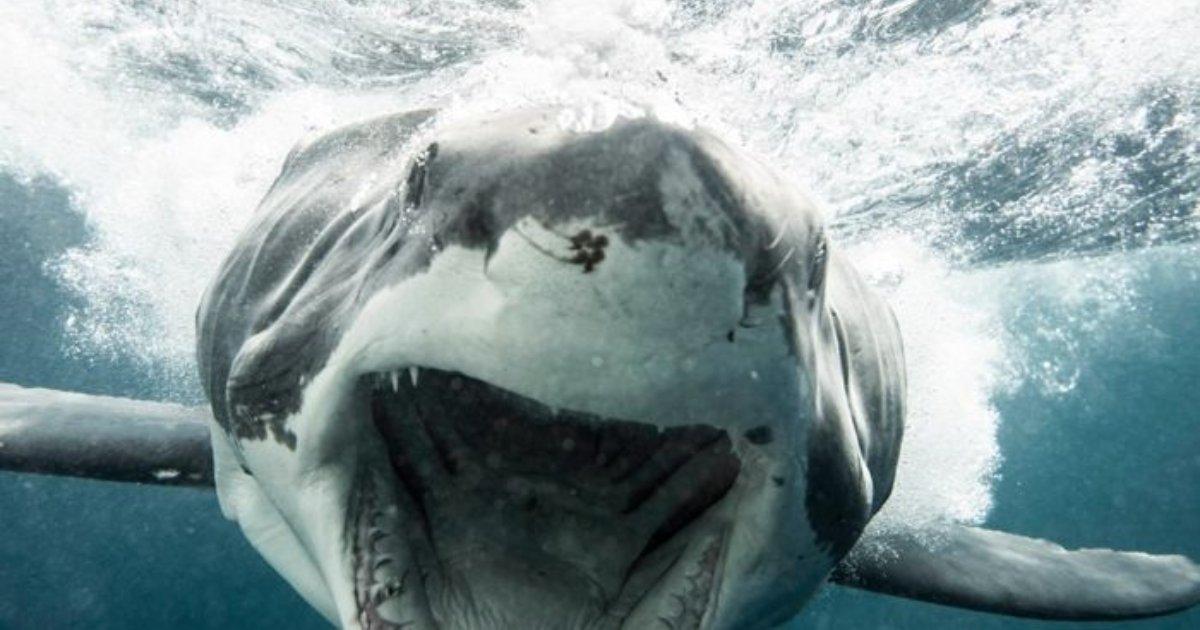 e696b0e8a68fe38395e3829ae383ade382b7e38299e382a7e382afe38388 10.png?resize=1200,630 - 水中撮影中、体長3mを超える超大型「サメ」と目が合ってしまった結果…