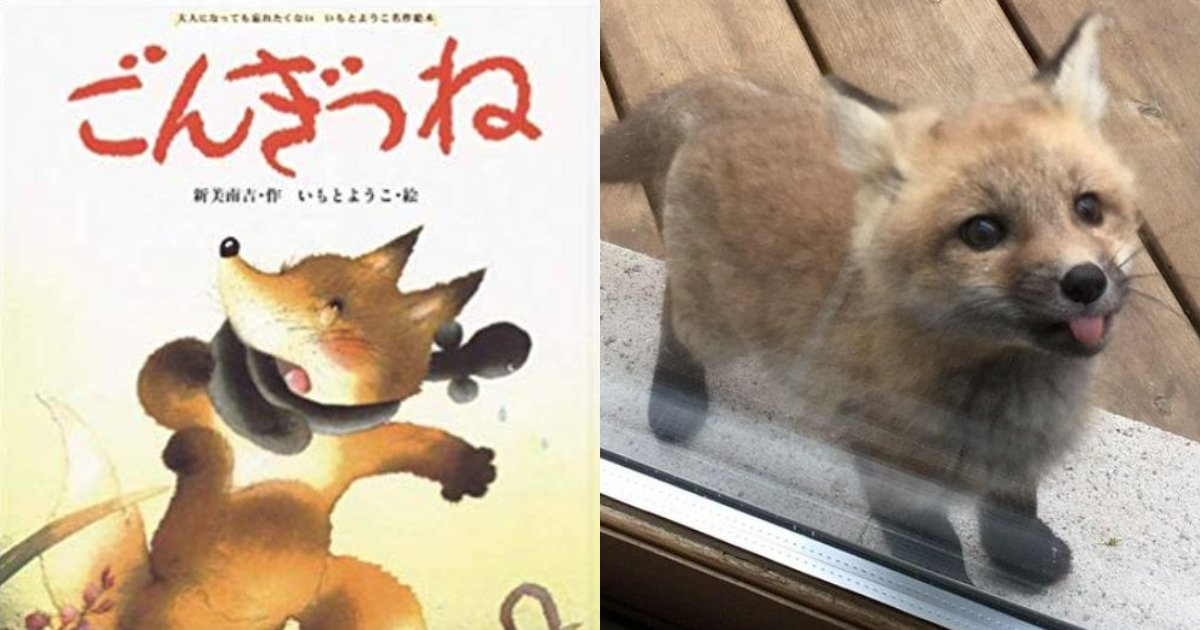"""e696b0e8a68fe38395e3829ae383ade382b7e38299e382a7e382afe38388 5 4.png?resize=412,232 - 田舎のおばあちゃんの家の窓から赤ちゃん狐が""""こんにちは""""!童話「ごんぎつね」の現実版!?"""