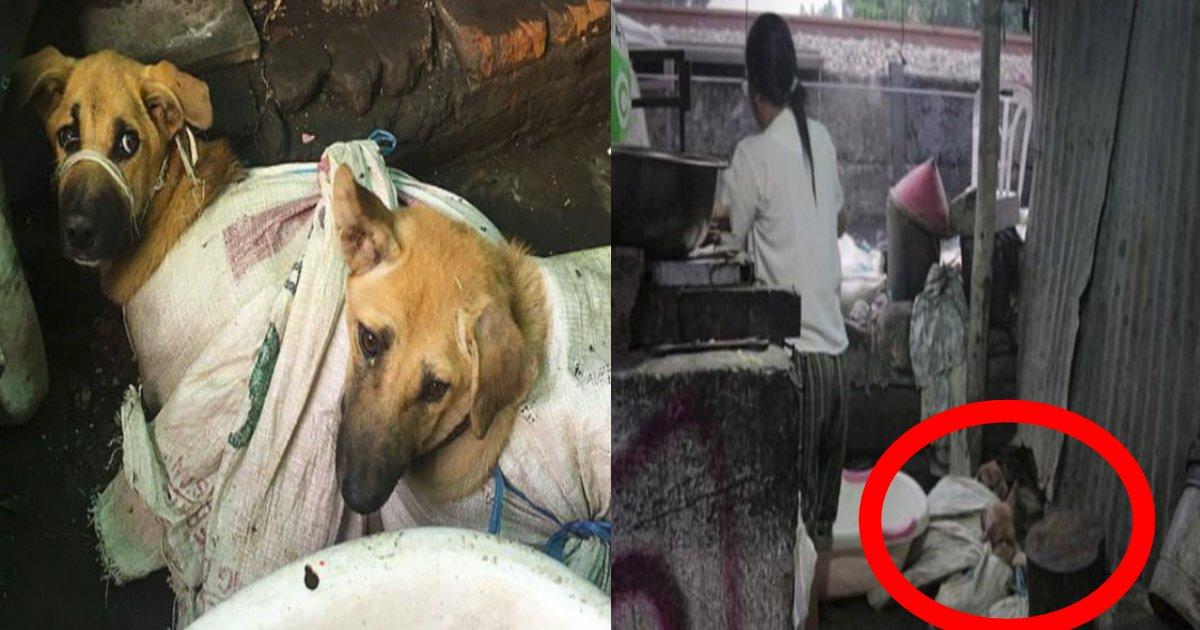 """e696b0e8a68fe38397e383ade382b8e382a7e382afe38388 5 5.png?resize=412,232 - 「捨て犬」を""""数千匹""""も売り渡す犬肉業者!?その想像できない行為は決して許せない!!"""