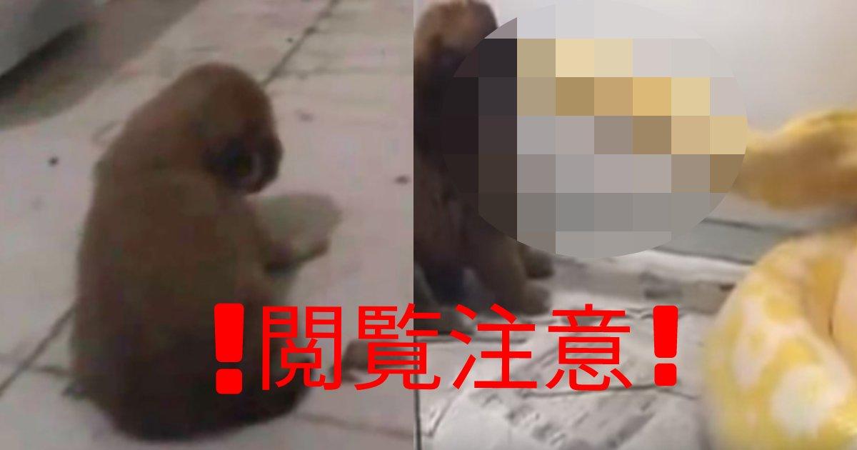e696b0e8a68fe38397e383ade382b8e382a7e382afe3838801 1.png?resize=412,232 - 【※閲覧注意※】中国、ニシキヘビに可愛い子犬を差し出し『エサ』なのか!?と非難殺到!