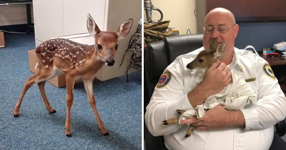 fawn6.png?resize=1200,630 - Rescuers Found Heartbroken Baby Deer Grieving Next To Mother's Body