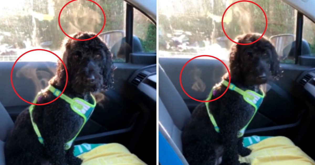featured image 54.png?resize=1200,630 - Why You Should Never Leave Dogs In Cars