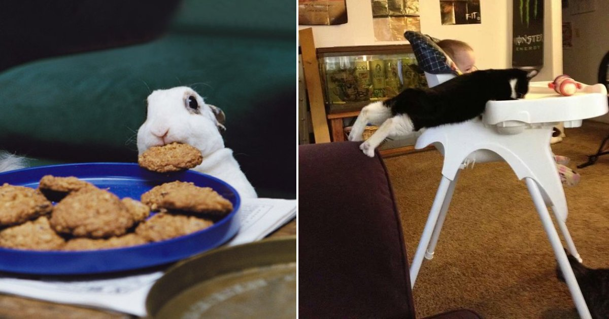 food thief.png?resize=412,232 - 15+ Hilarious Photos Of Furry Food Thieves