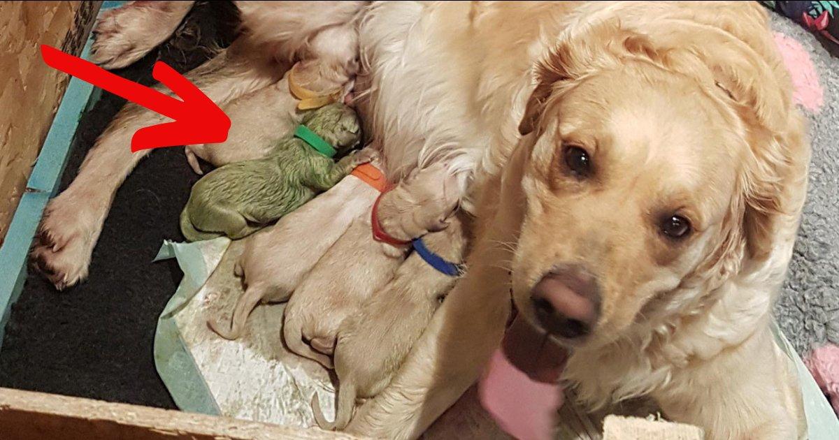 forest5.png?resize=412,232 - Une maman chienne donne naissance à un chiot RARE, seulement trois sont connus à ce jour