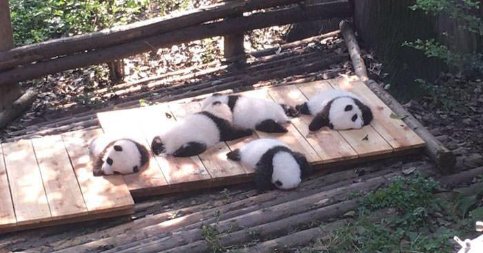 funny animal snapchats16 e1555056878942.jpg?resize=412,232 - 50+ Cute And Funny Animal Snapchats That Will Make Your Day