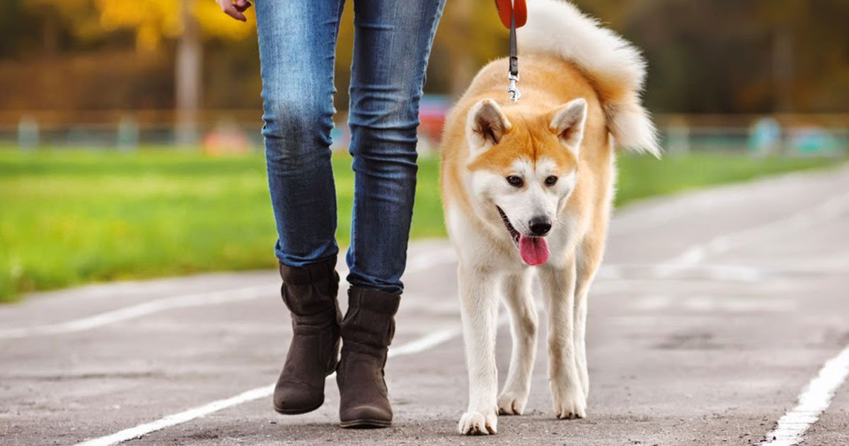 health benefits of walking with your dog each day.jpg?resize=412,232 - Health Benefits Of Walking With Your Dog Everyday
