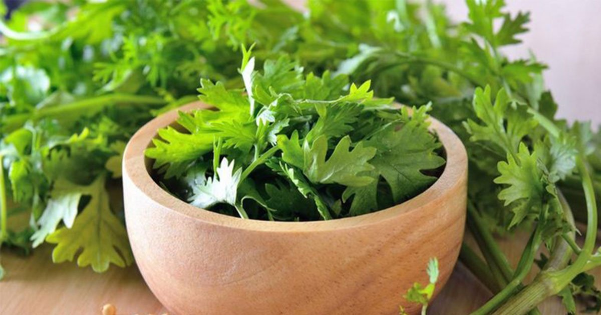 here is why cilantro taste like soap to some people.jpg?resize=412,232 - Here Is Why Cilantro Tastes Like Soap To Some People
