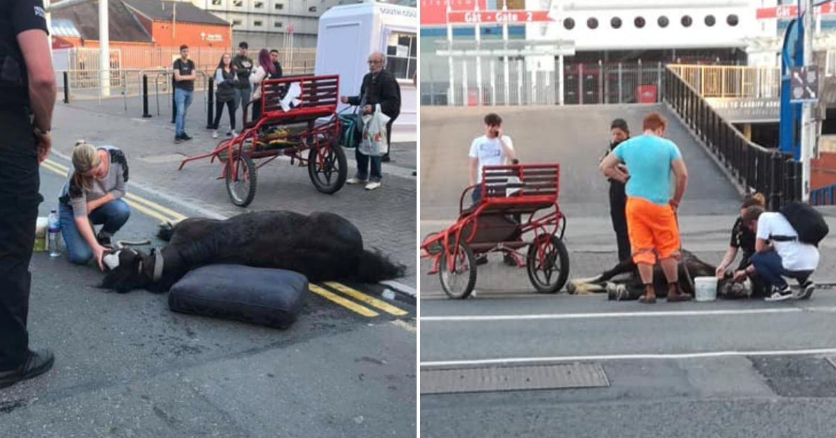 horse4.png?resize=1200,630 - Exhausted Horse Collapsed In Front Of Shocked People After Spending Long Hours In Heat