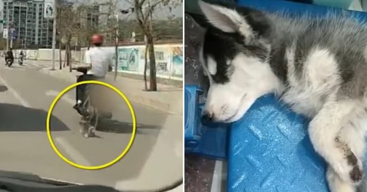 husky2.png?resize=1200,630 - People Outraged After A Man Dragged A Husky On The Road While Tied To A Motorcycle