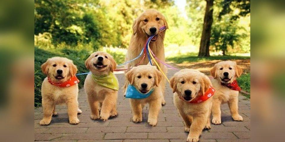 imgonline com ua frameblurred hysfu50mqpgc7dx e1554788183444.jpg?resize=636,358 - 22 Animal Photos That Can Make Any Day Brighter