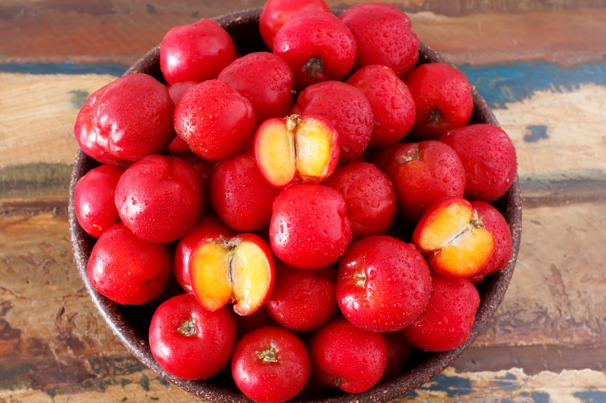 Image result for Jamaica cherry