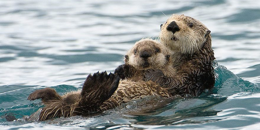 "lifebuzz dde0df770e4820062652365665935386 limit 2000 e1554272556471.jpg?resize=636,358 - 20+ Adorable Animal Families That Made Us Go ""Aww"""