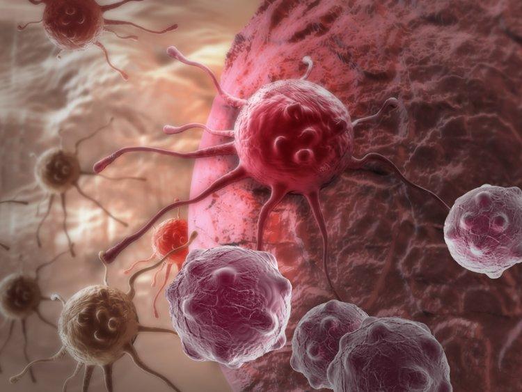 Image result for cancer cells 750