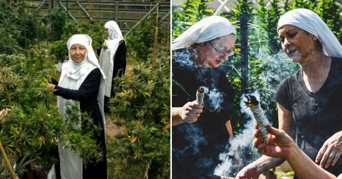 nuns7.png?resize=1200,630 - Meet The Marijuana-Growing NUNS Who Get $1,100,000 A Year Selling Cannabis-Based Products