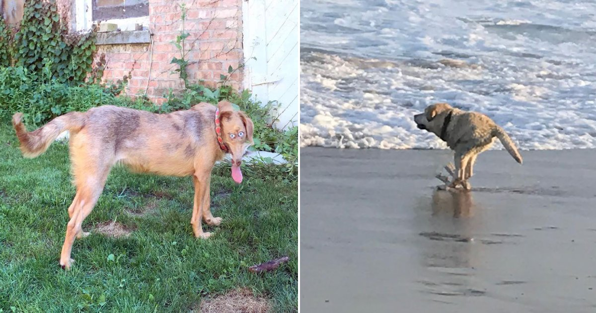 panorama fails.png?resize=1200,630 - 20 Animal Panorama Fails That Turned Out Be A Masterpiece