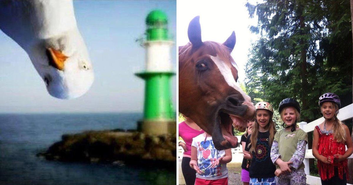 photobomb animals.png?resize=412,232 - 15 Hilarious Moments Where Animals Decided To Be Photobomb Masters