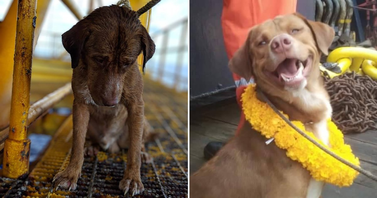 pupp7.png?resize=1200,630 - Exhausted Dog Found Swimming 220km From Shore, Rescuers Have No Idea How The Pooch Got There