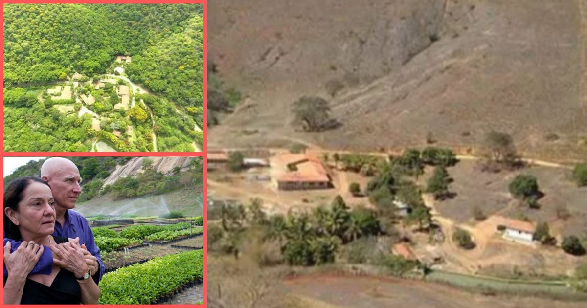 s1 15.png?resize=1200,630 - A Brazilian Couple Has Successfully Revived A Forest By Planting More Than 2 Million Saplings