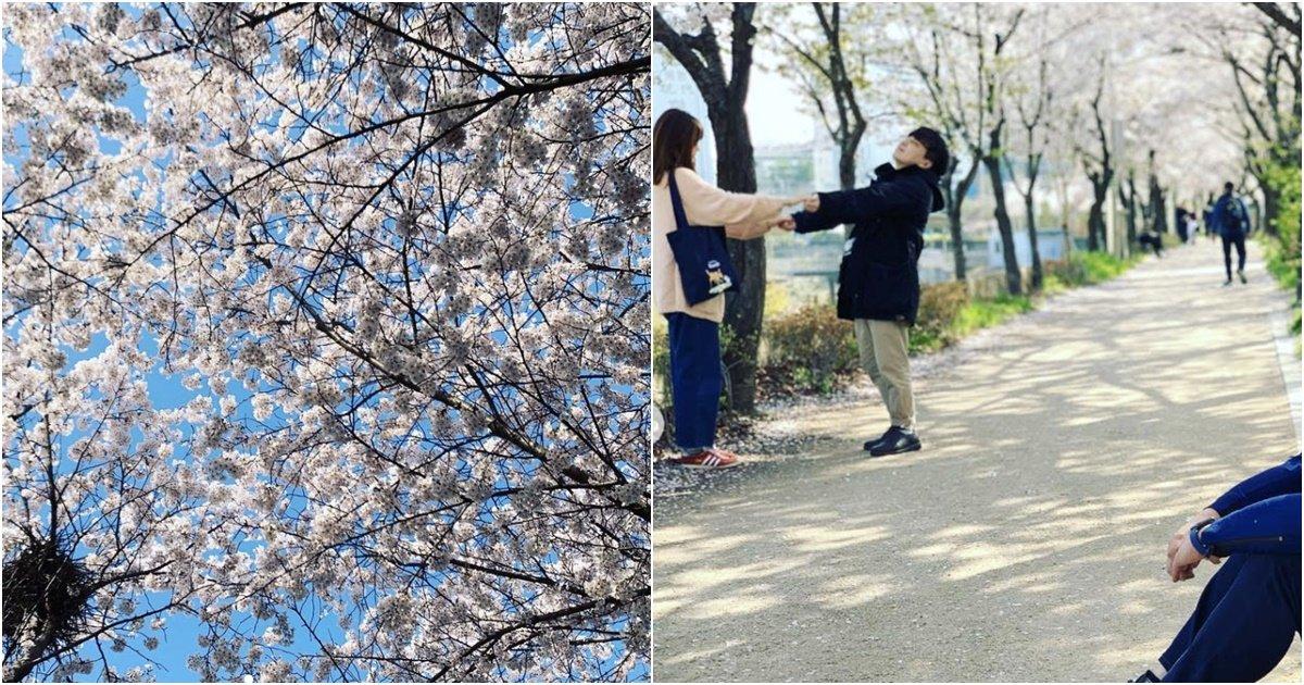 s68.jpg?resize=412,232 - 한 아나운서가 올린 벚꽃놀이 인증샷 커뮤니티에서 난리난 이유