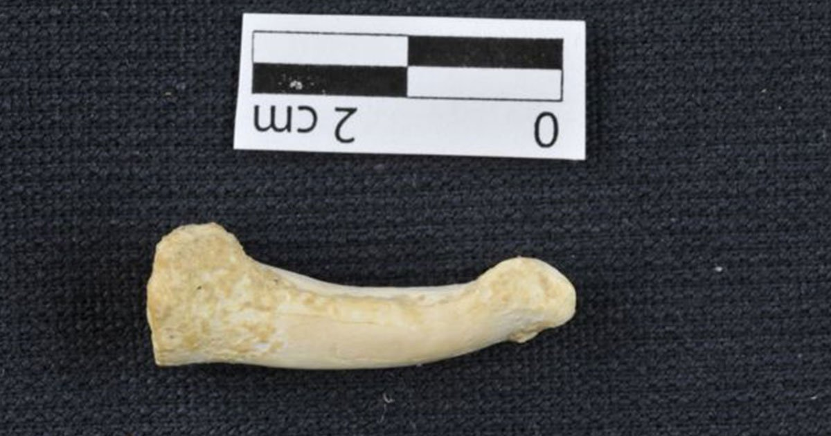 scientists discovered new species of pre human ancestors in the philippines.jpg?resize=412,232 - Scientists Discovered New Species Of Pre-human Ancestors In The Philippines