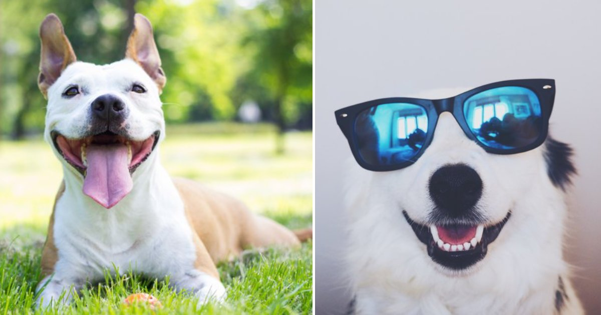 smiling dogs.png?resize=412,232 - 25+ Smiling Dogs That You Will Instantly Fall In Love With