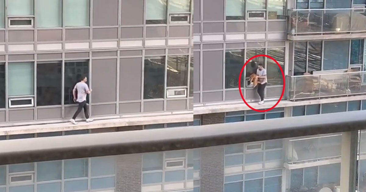 toronto man risked his life to save cat from balcony.jpg?resize=412,232 - Toronto Man Risked His Life To Save A Cat From The Balcony