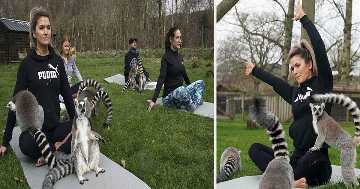 untitled 1 15.jpg?resize=412,232 - Connaissez-vous le «Lemoga» ? Voilà une nouvelle façon de faire du yoga, avec des lémuriens!
