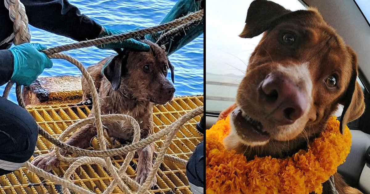 untitled 1 46.jpg?resize=1200,630 - Dog Rescued After Found Swimming 135 Miles Out At Sea