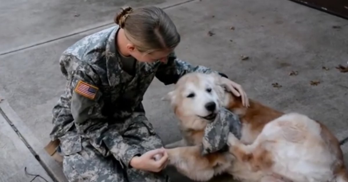 untitled design 1.png?resize=1200,630 - An Adorable Moment Where a Senior Pup is Standing in Front of Her Soldier Owner