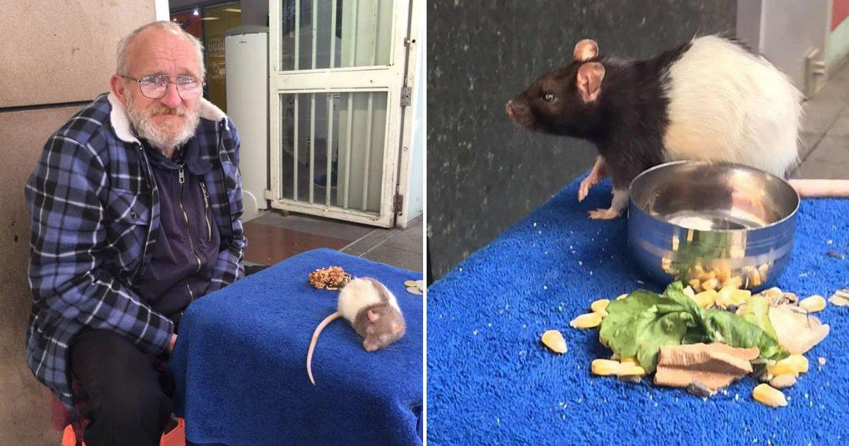 untitled design 12.png?resize=1200,630 - Homeless Man Is Begging People To Help Him Get Back His Beloved Pet Rat