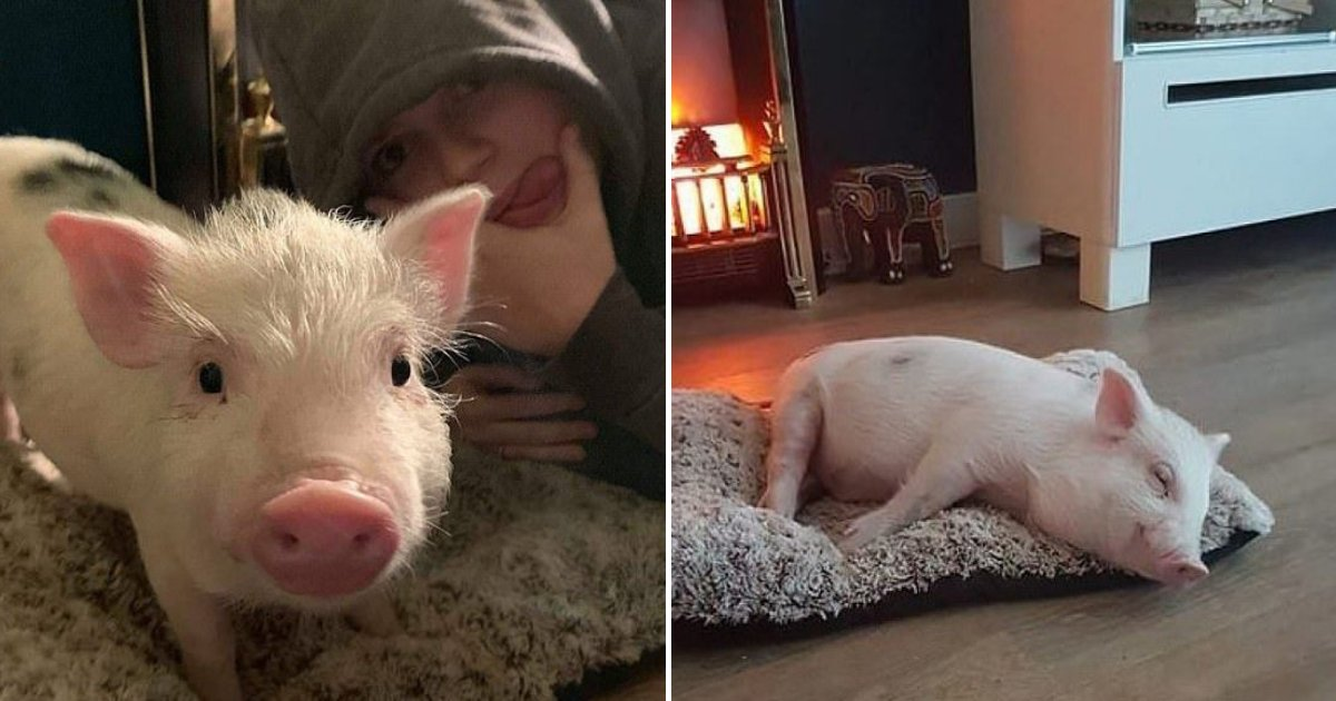 untitled design 18.png?resize=1200,630 - Vegan Family Could Lose Their Council Home After Rescuing Pig From Slaughterhouse