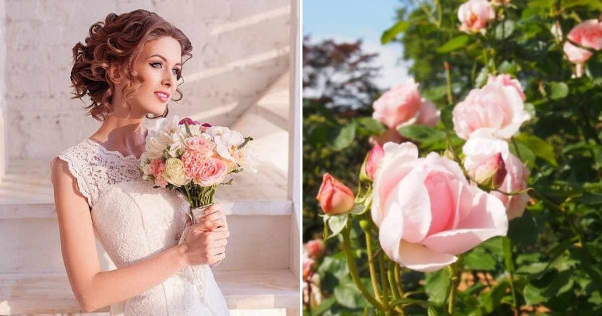 untitled design 59 1.png?resize=1200,630 - Bride Stole $300 Worth Of Roses From A Passionate Gardener For Her Wedding Reception