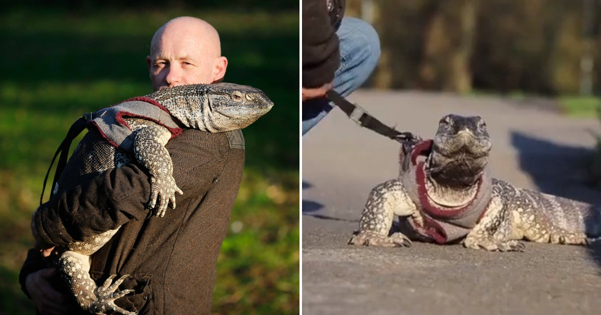 untitled design 60.png?resize=1200,630 - Man Told To Walk His Giant Pet Lizard On A Leash After It Scared Other Dogs