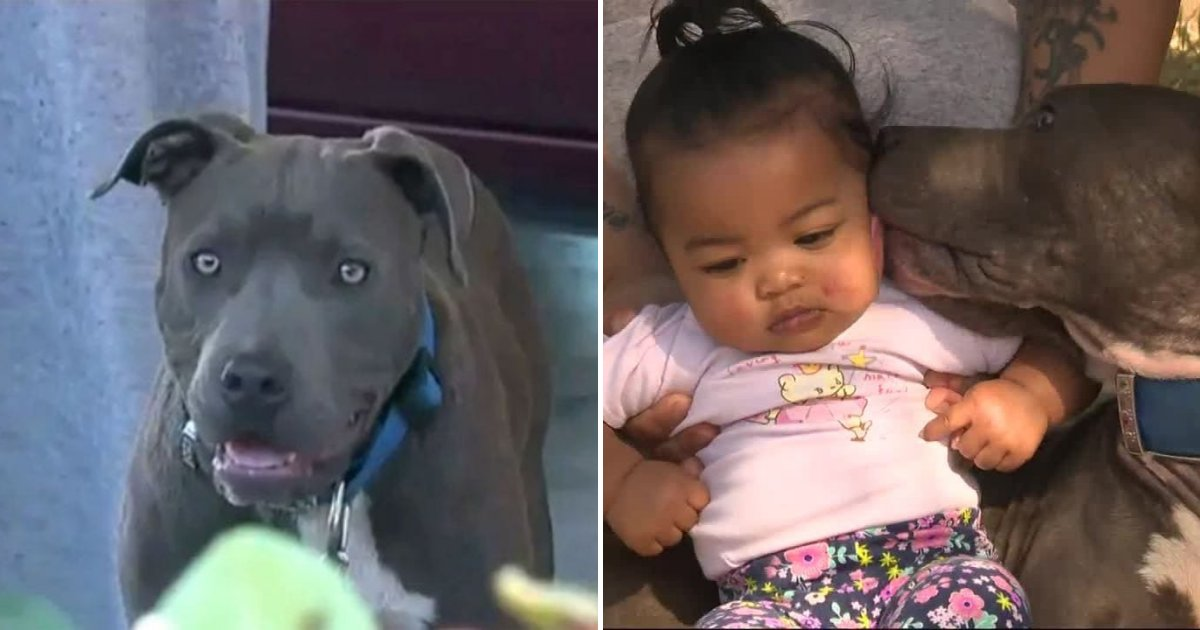 untitled design 62.png?resize=1200,630 - Dog Rescued 7-Month-Old Baby Who Got Trapped In A Burning Apartment
