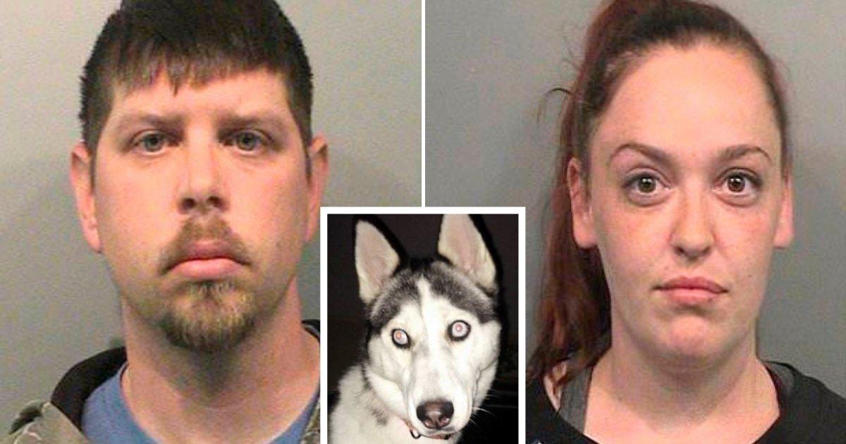 untitled design 84 1.png?resize=1200,630 - Un couple divorcé fait face à une peine de prison après avoir abandonné leur chien et l'avoir laissé mourir de faim
