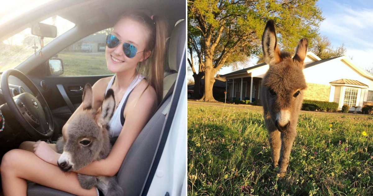 untitled design 91.png?resize=1200,630 - Teenage Girl's Life Changed Forever After Adopting Abandoned Baby Donkey