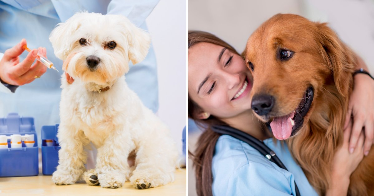 vet.png?resize=1200,630 - Anti-Vaxxers Refuse To Vaccinate Their Pet Dogs Amid Fears It Causes Autism